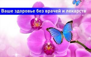 Zdorovye-banner
